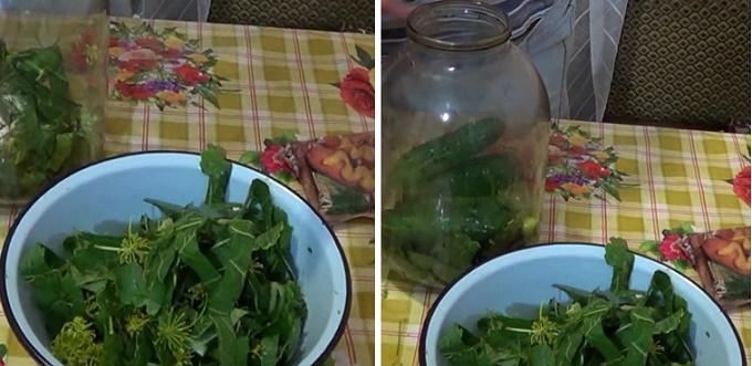 Готовим зелень для засолки огурцов